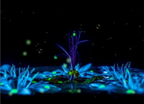 Анімаційна шпалера - Чарівні квіти