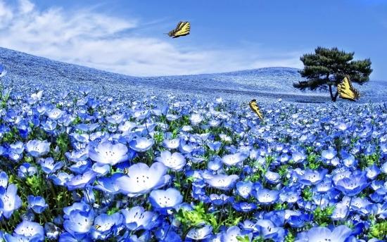 Анімаційна шпалера - Блакитні квіти