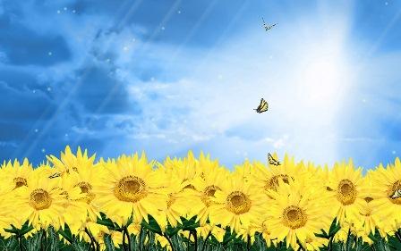 Анімаційна шпалера на робочий стіл - Соняшники