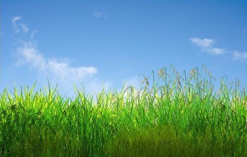 Анімаційна шпалера - Зелена трава