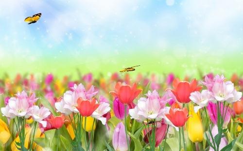 Анімаційна шпалера - Тюльпани