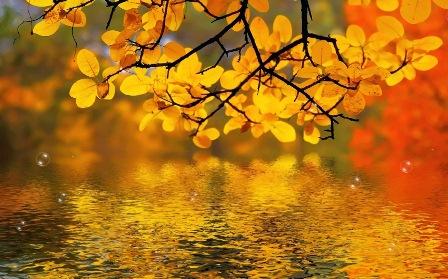 Анімаційна шпалера на робочий стіл - Золота осінь