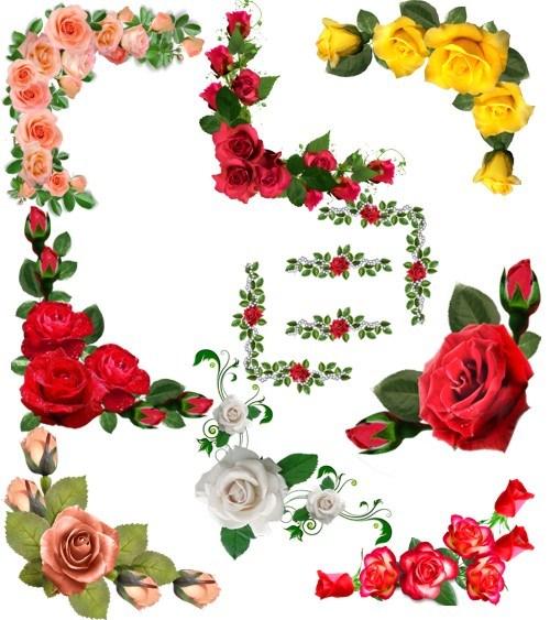 Кутики з розами