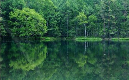 Анімаційна шпалера - Лісове озеро