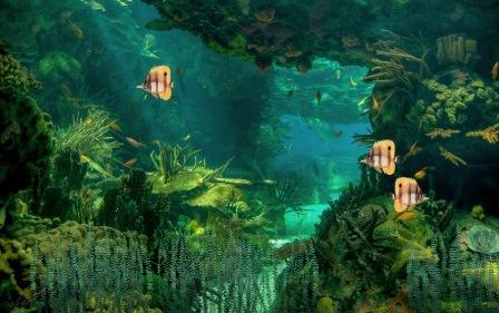 Анімаційна шпалера на робочий стіл - Підводний світ